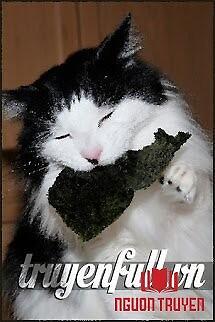 Nhặt Được Một Con Mèo Ba Tư - Nhat Đuoc Mot Con Meo Ba Tu